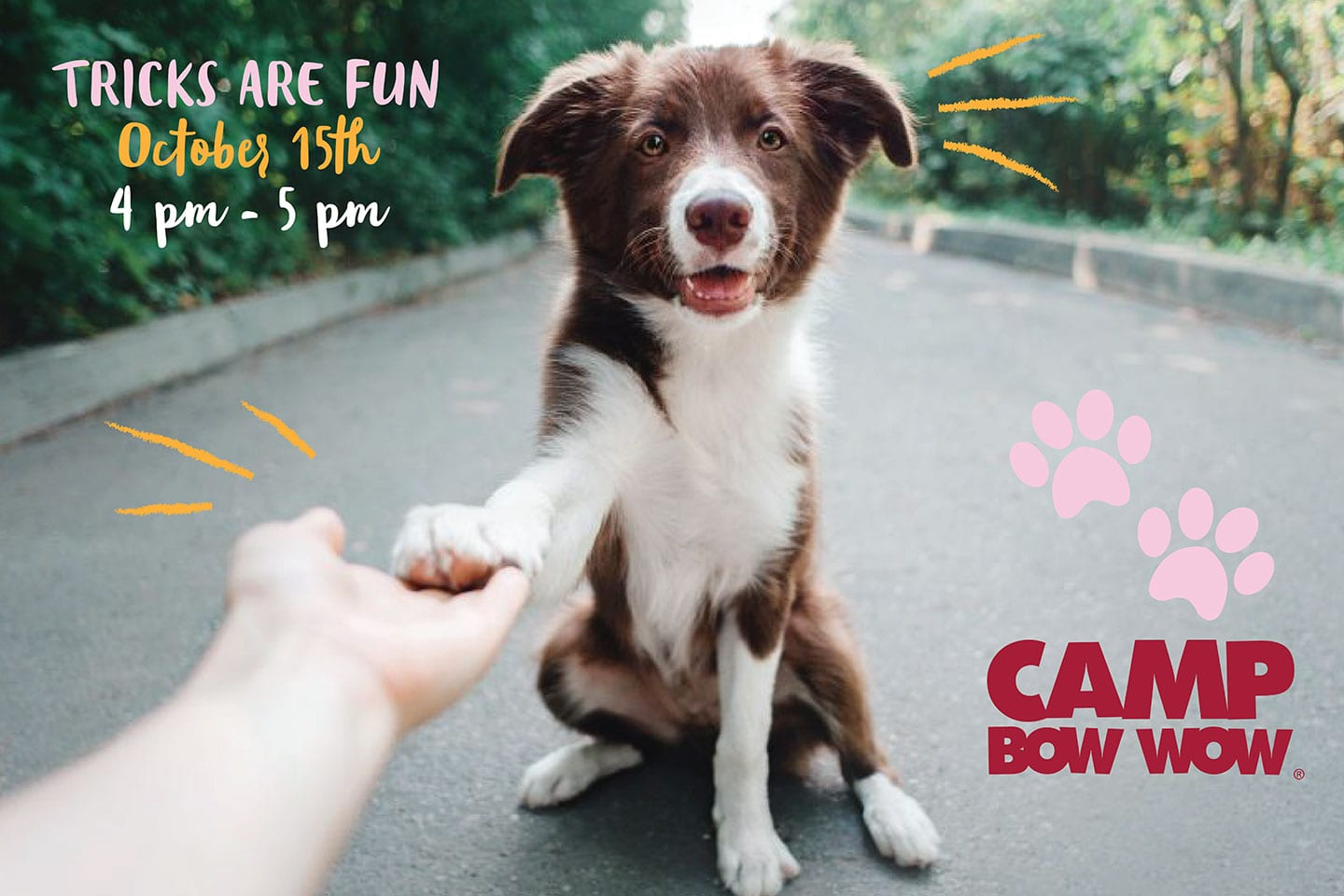 Camp Bow Wow graphic design agency kip and king marketing